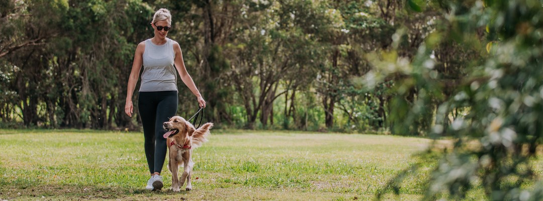 Take the lead on dog walking