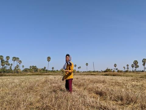 A local rice farmer in a recently harvested rice field, collecting wild herbs that are growing amongst the stubble. Photo: Ben Bostick