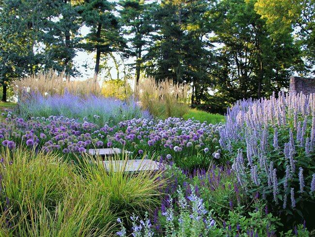 Allium path at Pennsylvania farmhouse