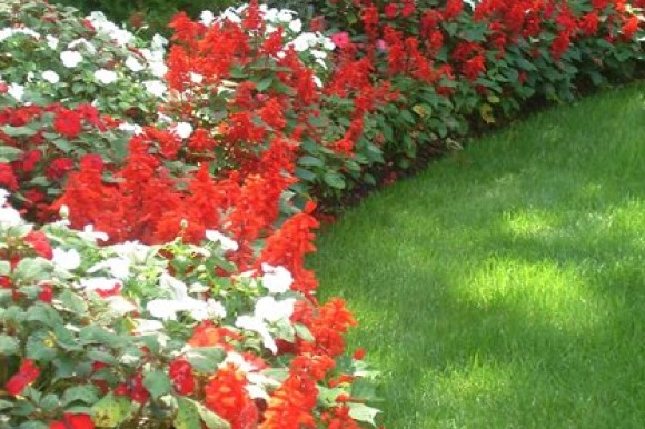 Red and white flower border