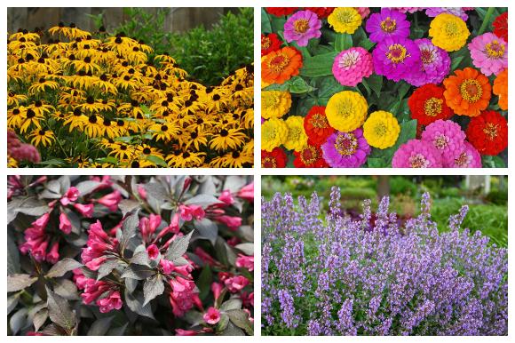Four low-maintenance flowering plants