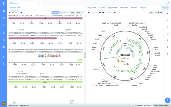 Benchling plasmid mapping tool