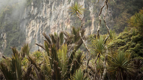 Limestone cliffs and nīkau palms in Paparoa National Park. Image: Baptiste Maryns ©