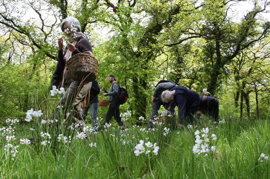 Gathering peppery cuckoo flowers for a wild salad