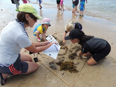 Beach Critter Identification
