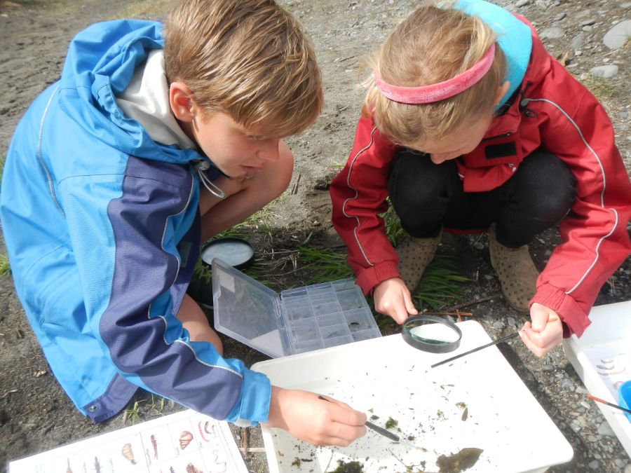 Students looking at macroinvertebrates