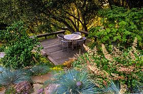 Summer Dry Garden in California