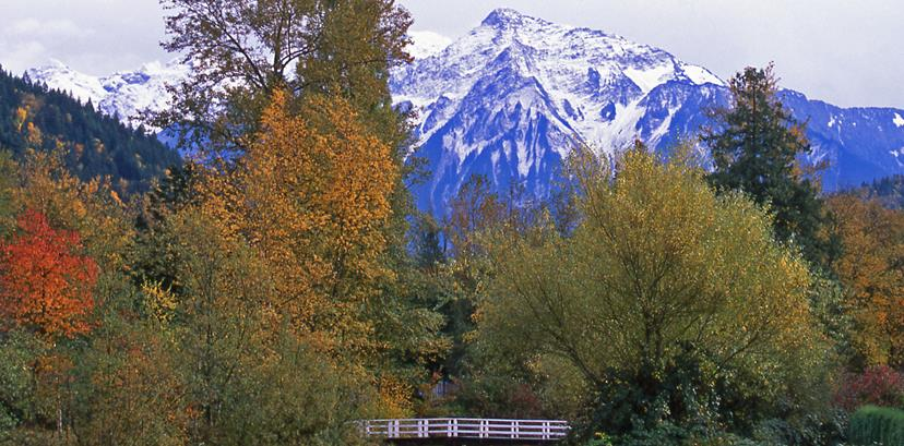 The trees in front of Mt. Cheam begin to turn red