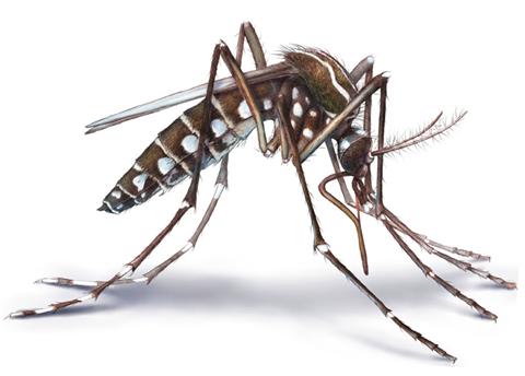 Exotic Mosquito species