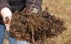 Mulch being held in hands
