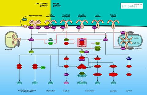 https://www.antibodies-online.com/pathway/TLR-Signaling-21/