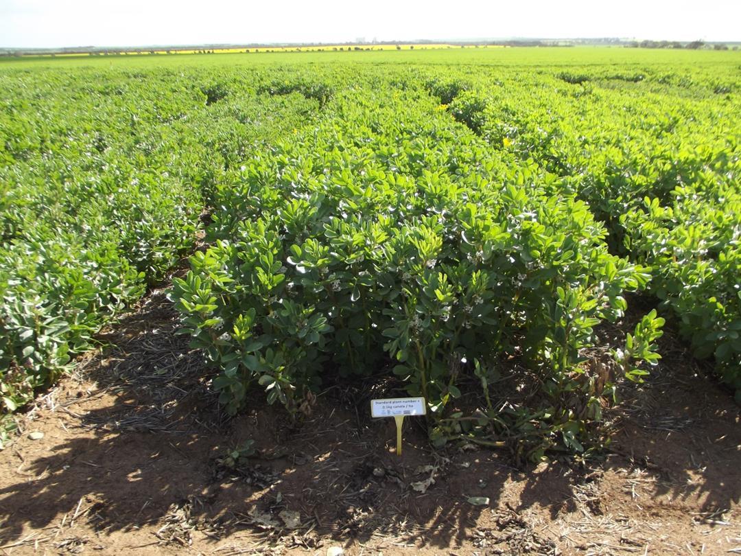 Eyre Peninsula crops.