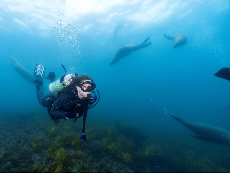 Snorkelling with seals, Montague Island New South Wales