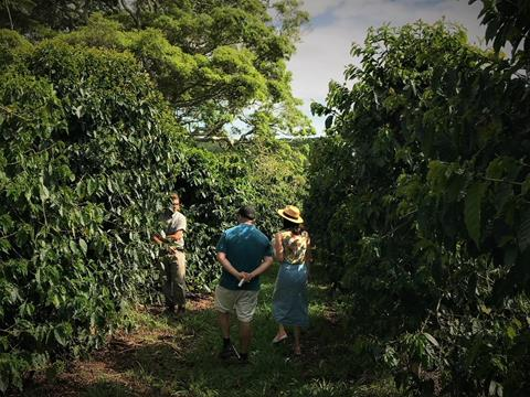 Coffee plantation tour in the Northern Rivers