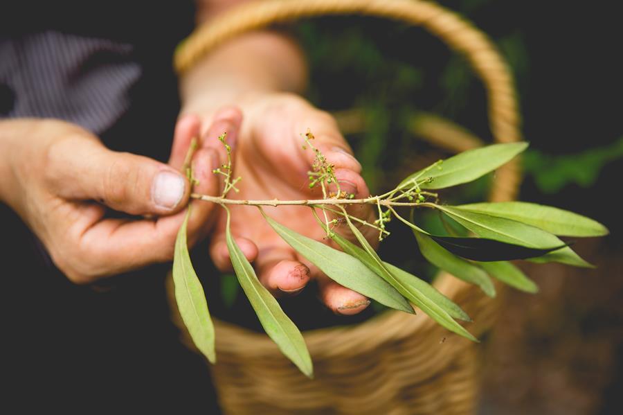 Wild Weed Foraging, The Royal Botanic Garden Sydney