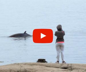 Vidéo Baleines
