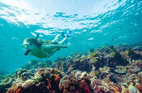 Snorkelling + diving on Lord Howe Island