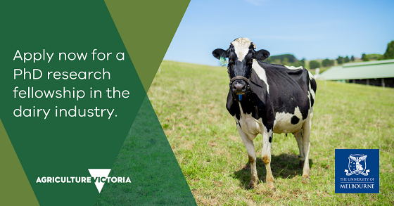 apply now for a phd research fellowship in the dairy industry