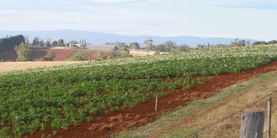 Gippsland crop