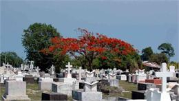 Belize City Cemetery