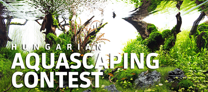 Hungarian Aquascaping Contest