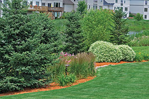 garden landscaping by blue tree