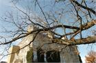 The historic oak tree located next to Eastern Illinois University&#39;s Old Main  Read more: http://jg-tc.com/news/article_4bcb0a30-0cec-11e1-abc5-001cc4c002e0.html#ixzz1dnUlk5ZQ