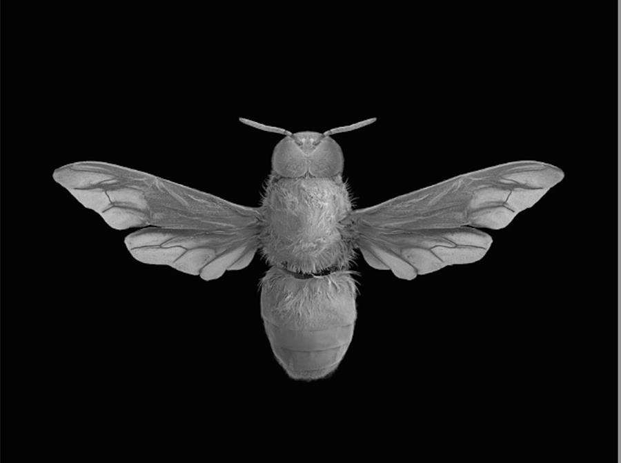 Dan Winters Honeybee image