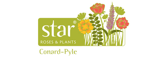 The Conard-Pyle Co. Star Roses  Star Plants