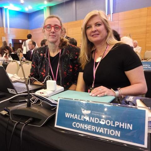 The WDC team fighting to keep the whaling ban