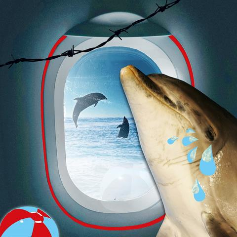 Campaign image of dolphin on plane