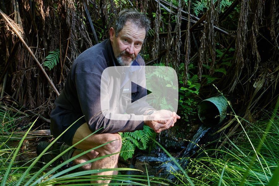 O Tātou Ngāhere ~ Our Forest