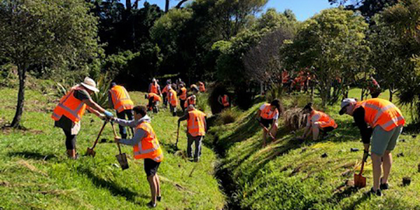 People wearing high-vis orange jackets standing on either side of a creek, planting shrubs.