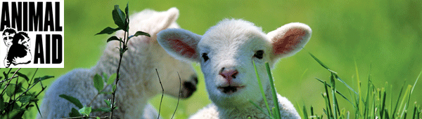 Animal Aid monthly e-news