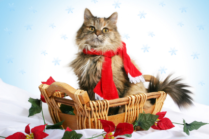 https://i2.createsend1.com/ei/y/24/D76/9CC/072527/csimport/cat_christmas_1.jpg